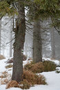 Free Winter Forest Stock Photos - 28637863