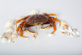 Free Crab With Seashells Stock Photos - 28684053