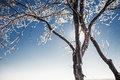 Free Snow-covered Tree Royalty Free Stock Images - 28688469