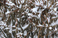 Free Bush In The Snow Royalty Free Stock Images - 28688649