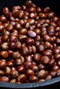 Free Chestnuts Royalty Free Stock Photo - 28728255