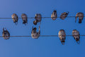 Free Pigeons On Electrical Cables Royalty Free Stock Photography - 28752437