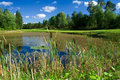 Free Golf Pond Brimmed With Reeds Stock Images - 2888984