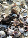 Free Sea Shells Stock Photo - 2970850