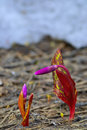 Free The Buds Of Early Spring Flowers. Royalty Free Stock Photo - 30878825