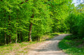 Free Forest Path Royalty Free Stock Image - 30881736