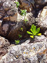 Free Plant Life Among The Rocks Royalty Free Stock Photography - 310537
