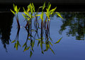 Free Water Grasses A Royalty Free Stock Photo - 3240425