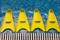 Free Four Yellow Flippers Stock Photos - 3269433