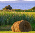 Free Mown Hay Stock Photos - 3361843