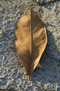 Free Dry Leaf On Dry Ground Royalty Free Stock Photos - 3389378