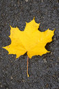 Free Leaf Royalty Free Stock Photo - 3451805