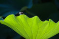 Free Dragonfly And Leaf Stock Photos - 35540303