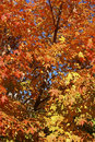 Free Autumn Colors Stock Images - 3587234