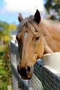 Free Friendly Horse Stock Photography - 3953672