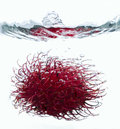 Free Rambutan Splash Royalty Free Stock Photography - 4182587
