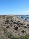 Free Elephant Seals With Sky Royalty Free Stock Photos - 4238568