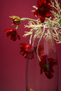 Free Distinguished Flowers In Glass Vase On Maroon Stock Image - 4354501