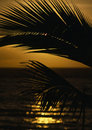 Free Palm Frond Stock Images - 451204