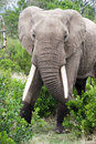 Free Elephant In The Reserve Royalty Free Stock Images - 4648369