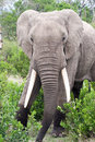 Free Elephant In The Reserve Stock Images - 4648394