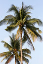 Free Palms On The Beach Stock Images - 4699004