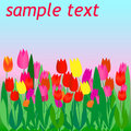 Free Tulip Flyer Stock Photography - 4741472