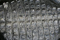 Free Alligator Skin Scales Royalty Free Stock Photos - 4809268