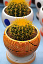 Free Cactus In Basket Bowl Royalty Free Stock Images - 4819829