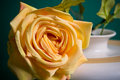 Free Fragment Of Shallow Ceramic Vase With A Rose Royalty Free Stock Image - 5062706