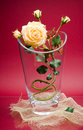 Free Glass Vase With Yellow Rose On Maroon Royalty Free Stock Photo - 5154975