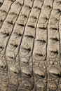 Free Croc Skin Royalty Free Stock Photos - 5212948
