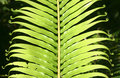 Free Frond Composition Royalty Free Stock Image - 5233076