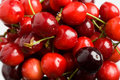 Free Red Cherries Royalty Free Stock Photography - 5297787