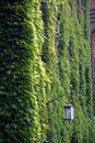 Free Green Leaves Wall Royalty Free Stock Photos - 5426818