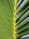 Free Palm Frond Stock Photo - 5450050
