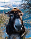 Free Free Me Donkey Stock Photography - 5571042