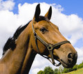 Free Horse Head In A Cloudy Sky Stock Photos - 5590983