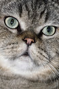 Free Lovely Face Of The Cat Royalty Free Stock Photo - 5613245