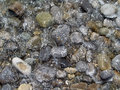 Free Sea Pebble Stock Image - 5921981