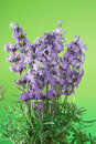 Free Bunch Of Lavender Stock Photography - 5930622