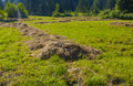 Free Haymaking In Siberia 26 Royalty Free Stock Images - 5963169