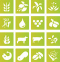 Free Green Farming Crop Icons Royalty Free Stock Photo - 6032235