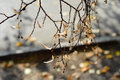 Free Beautiful Delicate Branch Of A Tree In Shades Of Brown. Royalty Free Stock Photos - 61036358
