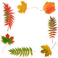 Free Leaves Of Autumn Stock Photography - 6138982