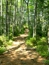 Free Forest Trail Stock Image - 6151021