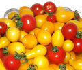 Free Tomatoes Stock Photography - 6166352