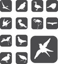 Free Set Buttons - 52_F. Birds Stock Photography - 6168232