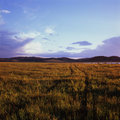 Free Grassland Stock Photos - 6206423