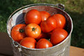 Free Bucket Of Fresh Tomatoes Stock Images - 6212104